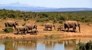體形龐大的大象圖片_10張
