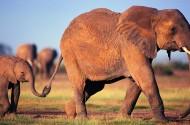 大象图片_24张
