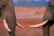 大象局部特写图片_14张
