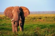 正面大象图片_8张
