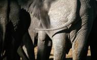 大象图片_20张