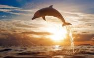 海豚图片_9张