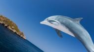 可爱海豚图片_8张