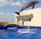 戏水的海豚图片_6张