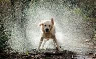 水中嬉戲的狗狗圖片_10張