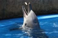 可爱的海豚图片_11张
