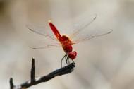 停歇的蜻蜓图片_13张