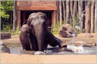 正在洗澡的大象图片_17张