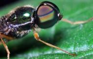 苍蝇微距摄影图片_8张