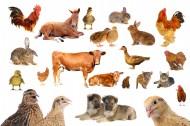 各种动物图片_10张
