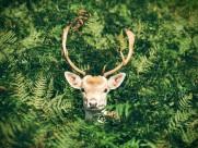 各种种类的鹿图片_16张