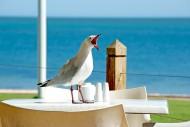 可爱的鸽子图片_12张