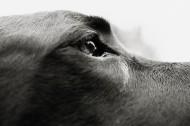 狗的局部特写图片_37张