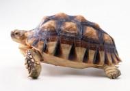 龟类图片_25张