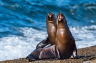 海狮与海龟的图片_15张