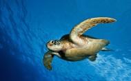 海龜圖片_10張