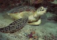海龟图片_6张