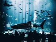 海里的鲨鱼图片_9张
