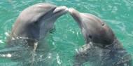 可愛海豚高清圖片_15張