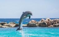 水中嬉戲的海豚圖片_22張