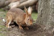 兔子图片_14张