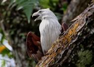修飾羽毛的鷹圖片_10張