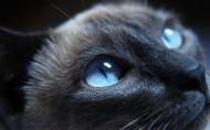 可爱的小黑猫图片_22张