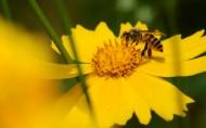 勤劳的小蜜蜂图片_8张