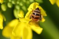 勤劳的小蜜蜂图片_6张