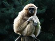 活泼机警的猴子图片_11张