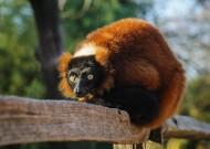 猴子图片_12张