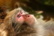 可愛的猴子圖片_16張