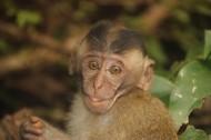 可爱呆萌的猴子图片_15张