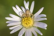 花朵上的蜘蛛图片_7张