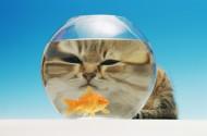 滑稽小猫图片_24张