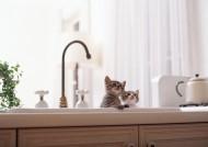 家有顽皮小猫图片_36张