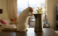 唯美浇花水壶与猫的图片_9张