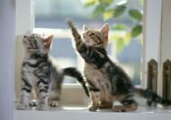 家庭宠物可爱猫咪图片_74张