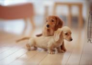 家庭可爱宠物狗图片_126张