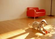 家有斑點狗圖片_12張