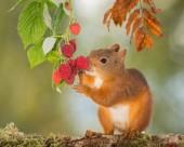 机灵可爱的松鼠图片_15张