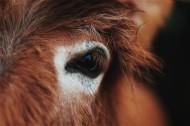 骏马的眼睛图片_12张