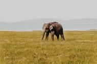 可爱的大象图片_9张