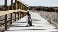 聰明可愛的企鵝圖片_7張