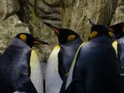 可愛的企鵝圖片_10張