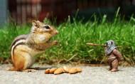 可爱的松鼠图片_11张