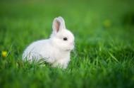可爱的小白兔图片_9张