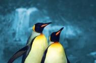 可愛企鵝圖片_3張