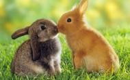 可愛兔子圖片_6張