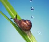 可爱小蜗牛图片_6张
